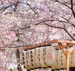 Inspiratie deco bloemen Japanse sierkers