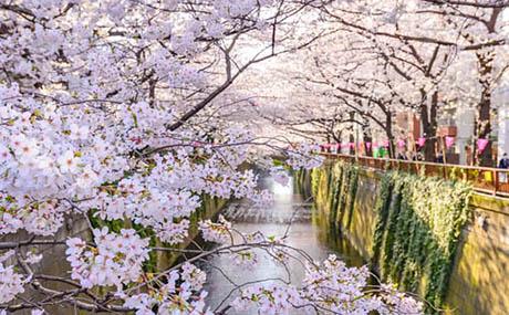 Inspiratie deco bloemen rivier